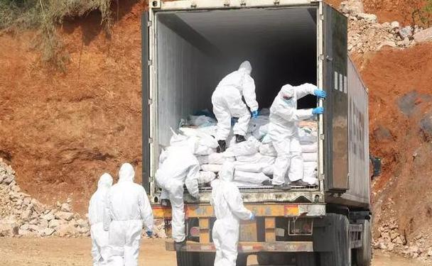 黑心商贩跨省贩售27吨非洲猪瘟肉在阳新县被批捕